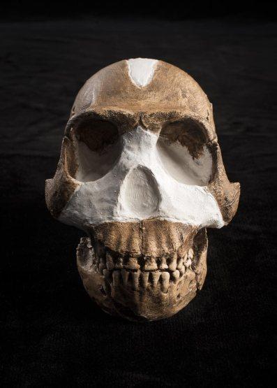 los_fosiles_del_homo_naledi_al_noroeste_de_johannesburgo_sudafrica_NG