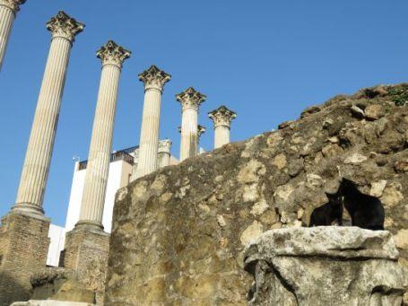 cordoba-templo-romano-gatos