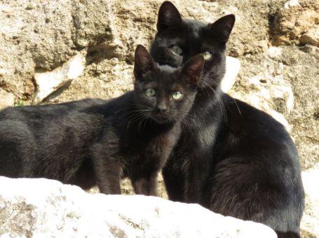 gatos-templo-romano-cordoba