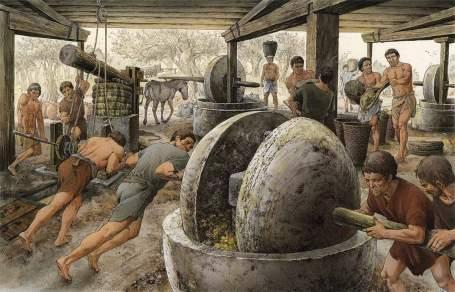 El aceite de oliva - un producto indispensable para la vida del Imperio Romano 2